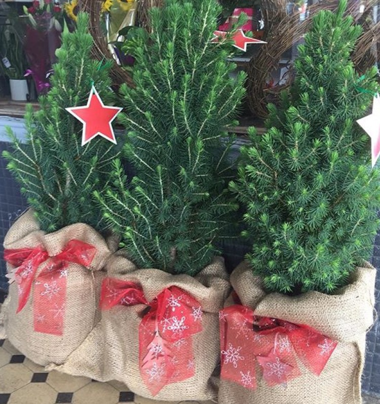 10 Tips For A Less Wasteful Christmas Gippsland Unwrapped