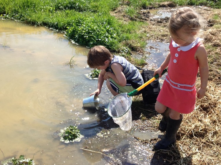 Two children looking for tagpoles in a large puddle.
