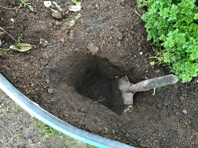 Dig a hole for dig and drop composting