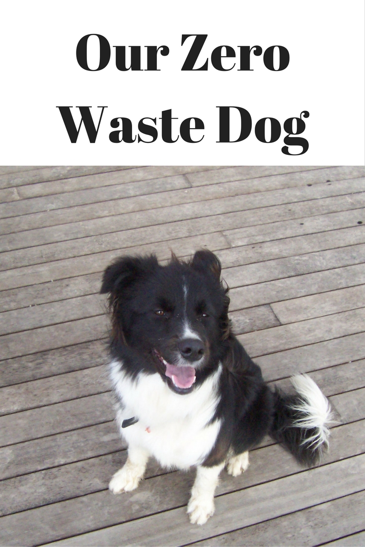 Our Zero Waste Dog